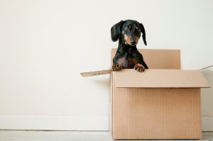a dog in the box