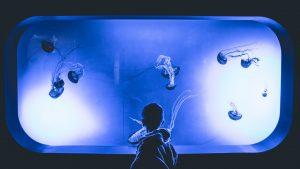 boy watching jellyfish in an aquarium