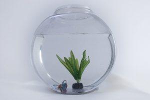 A small fish tank