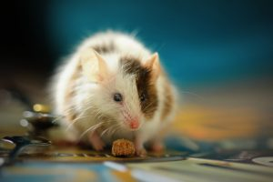 A rat the protection from which is one of the benefits of a climate controlled storage