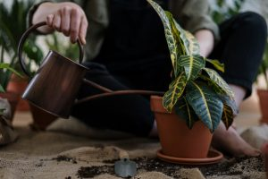 a person watering a house plant on the floor after replanting it