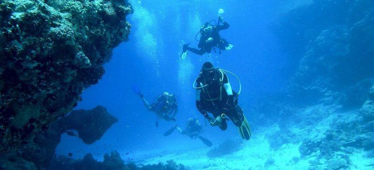 A diver is exploring the sea.