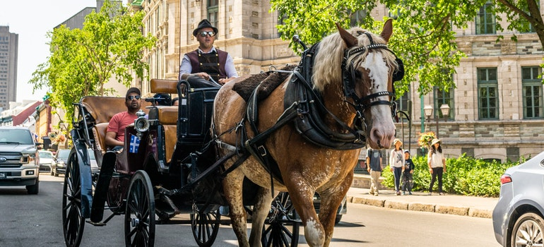 A man is riding a carriage in the middle of the street in Canada
