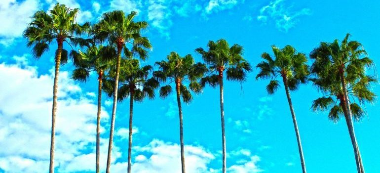 palm trees and the blue sky in Florida where you are selling your Deerfield beach home