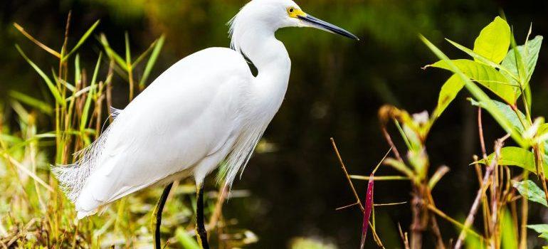 A white crane