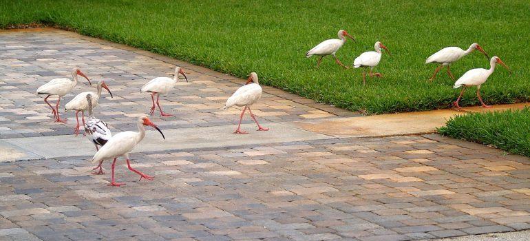 Birds walking on your sideway