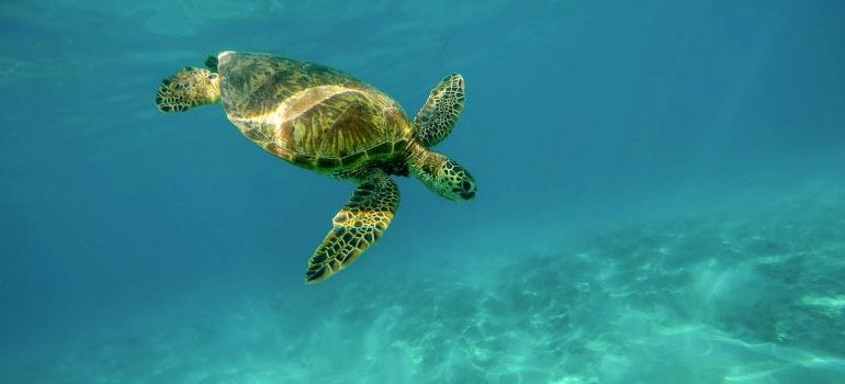 watching turtles is one of the activities that make Deerfield Beach perfect for families with kids