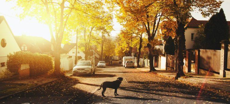 A dog on suburban road