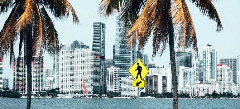 Palm trees near buildings.