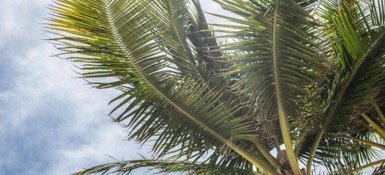 Miami beach tree